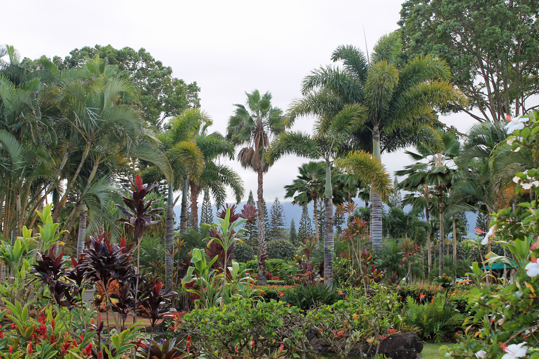 Dole Garden Plantation2