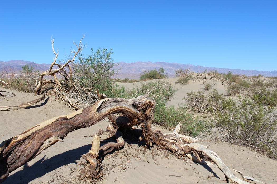 mesquite-flat-sand-dunes01