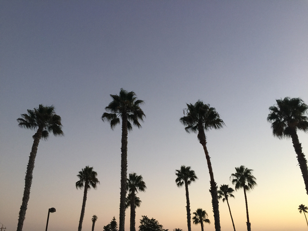 pismo-beach-palmen