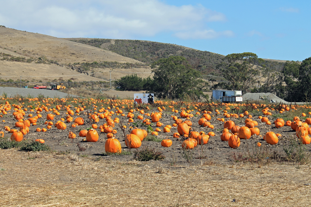 Pumpkin Patch Kalifornien