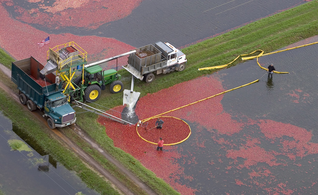 Bassuener Cranberry Marsh and Urban Processing facility in Wisconsin Rapids, Wis., Oct. 3, 2006. (Photo Andy Manis)
