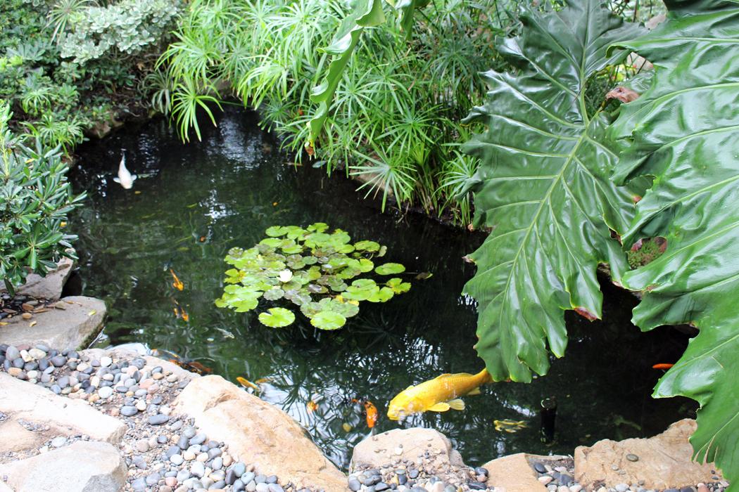 meditation-garden-encinitas15