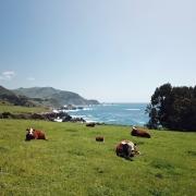 Gesund leben und reisen: Roadtrip durch Kalifornien (San Francisco bis Los Angeles)