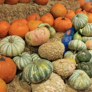 Herbst ist Kürbiszeit - Heimische Superfoods + Rezepte