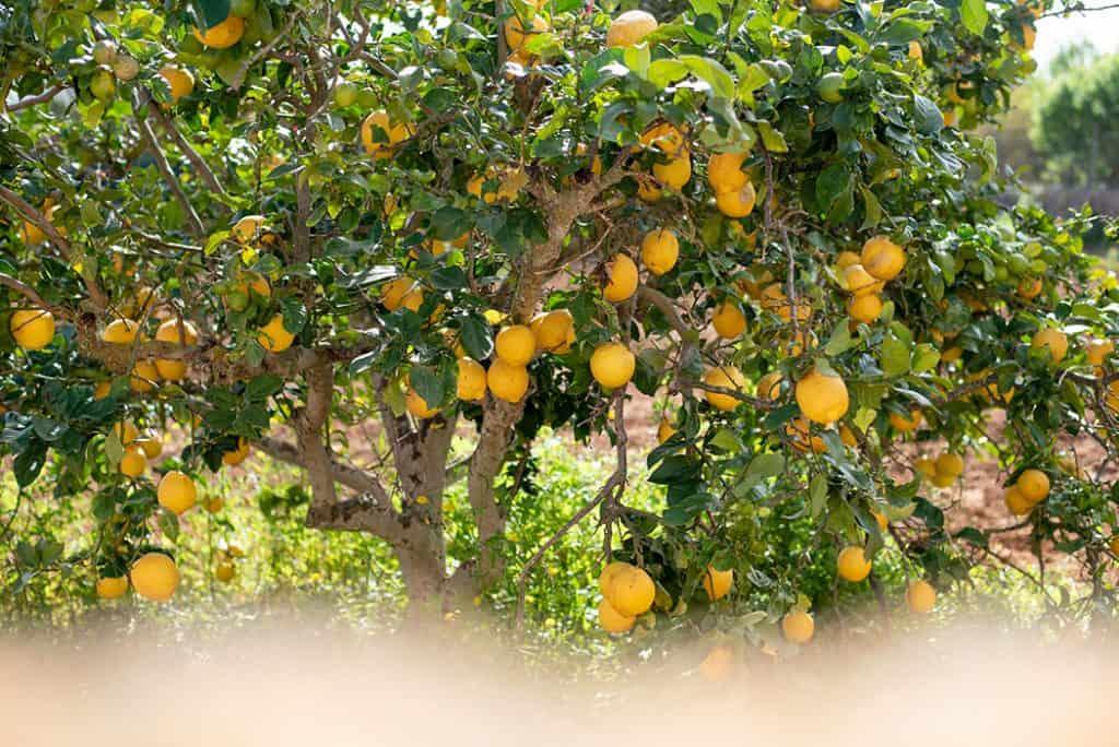 Projekt Gesund leben Retreat Cal Reiet Mallorca44