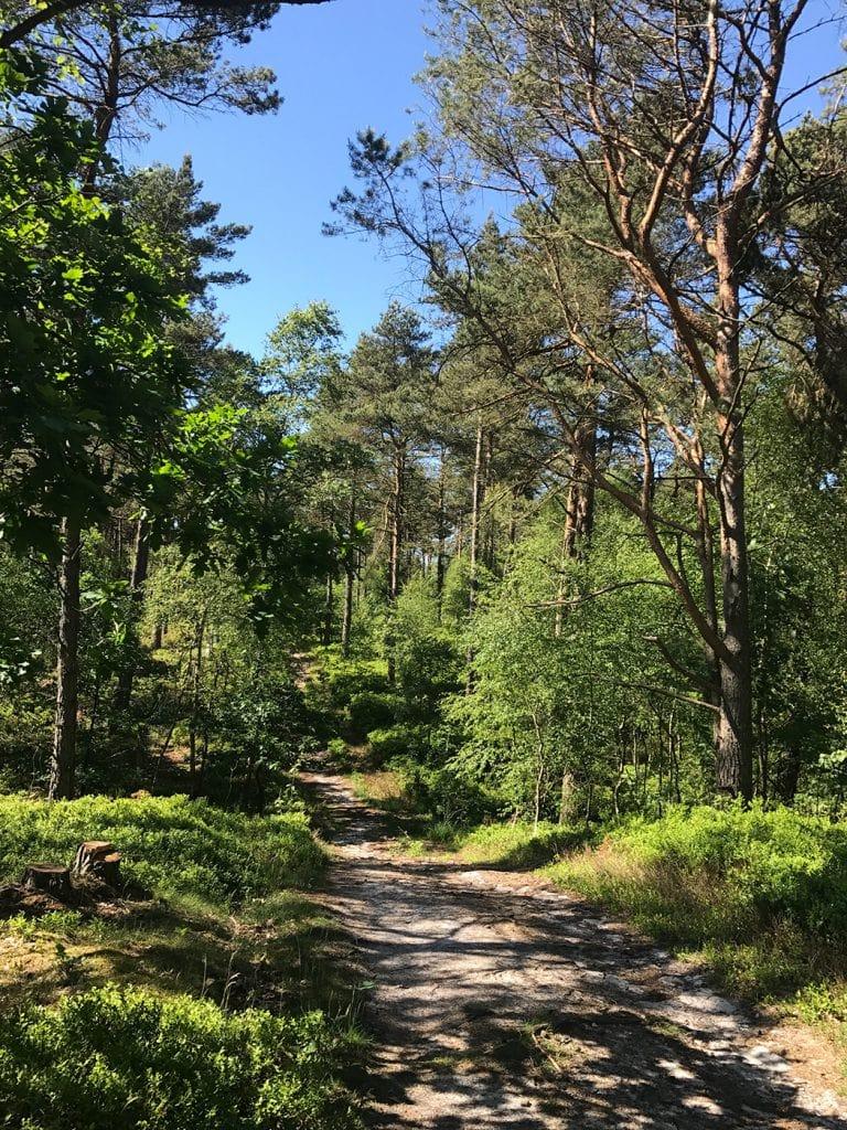 Lueneburger Heide2